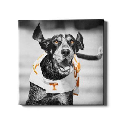 Tennessee 24x24 Smokey Touchdown Canvas