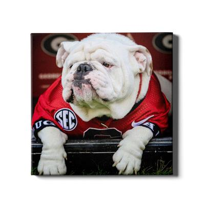 Georgia 24x16 Uga Chillin Canvas