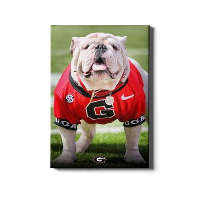 Georgia 16x24 Uga Poised II Canvas